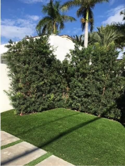 Eco Friendly Grass For Posh Estates