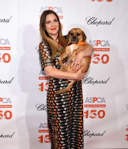 """Drew Barrymore and friend at the Plaza Hotel, where the ASPCA honored the actress for her work on behalf of animal welfare. Barrymore is wearing a Tory Burch gown, also chosen by Kate Middleton when she met with the King and Queen of Bhutan. All images by Jamie McCarthy/Getty Images for ASPCA)"""""""