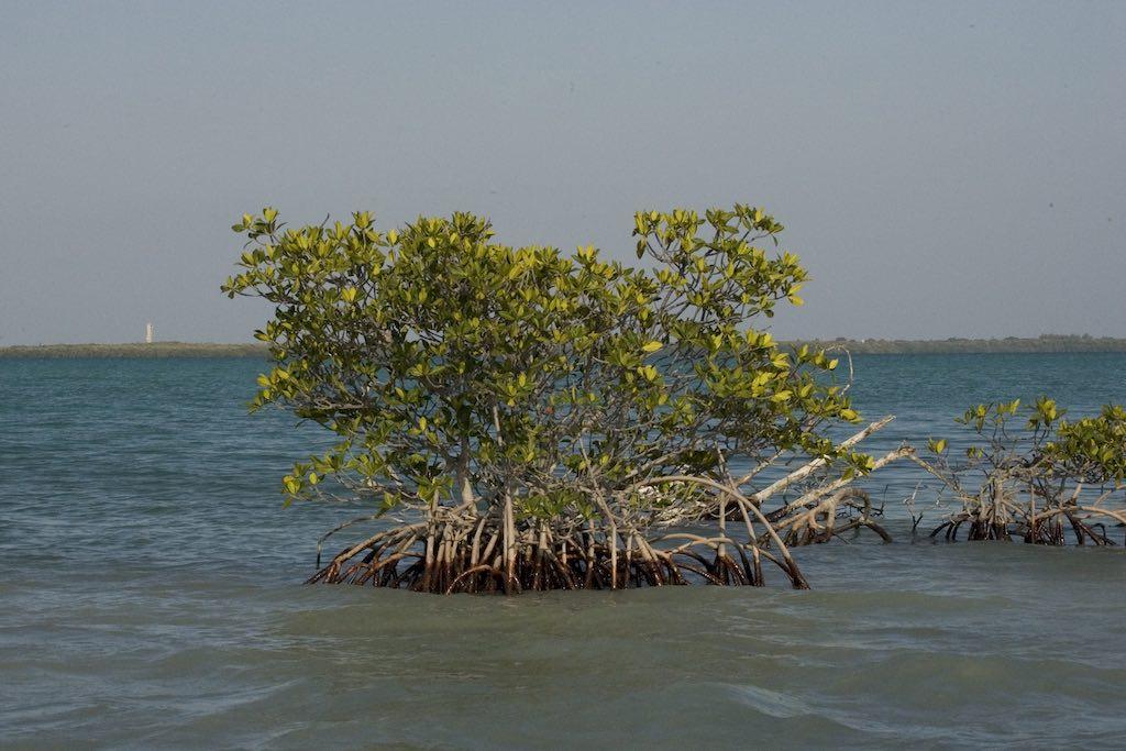 Florida Bay, Everglades National Park