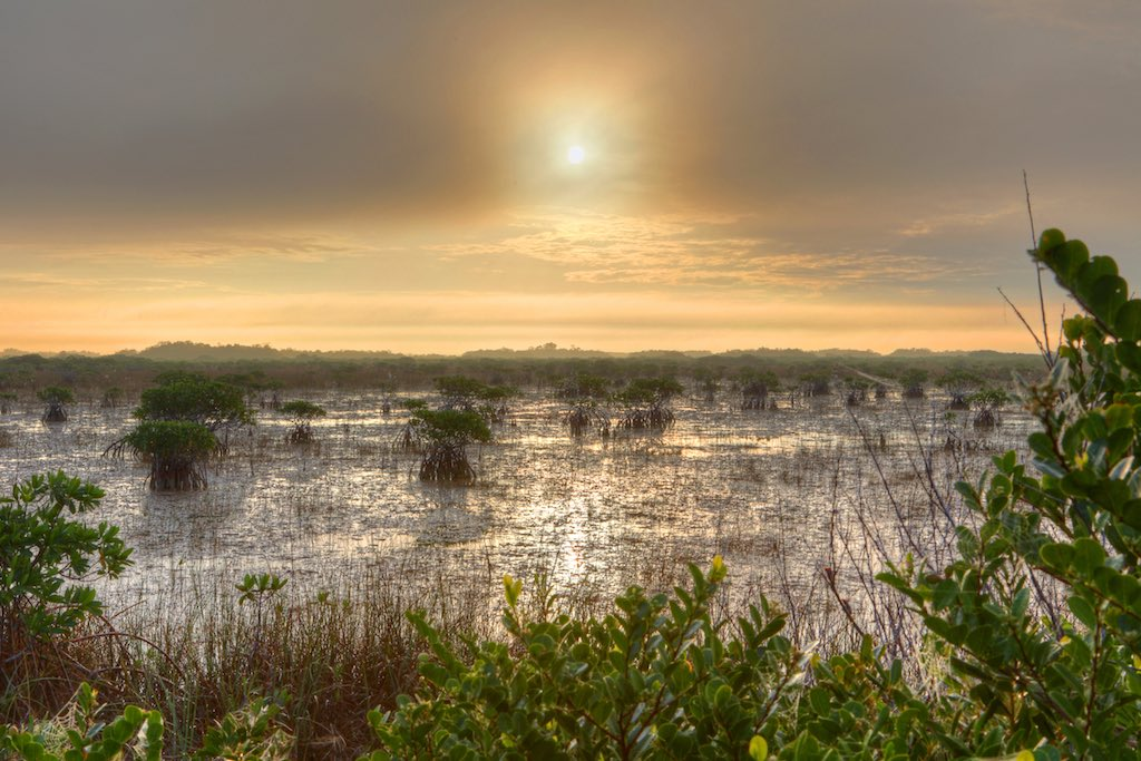 Mangroves in river of grass, Everglades National Park
