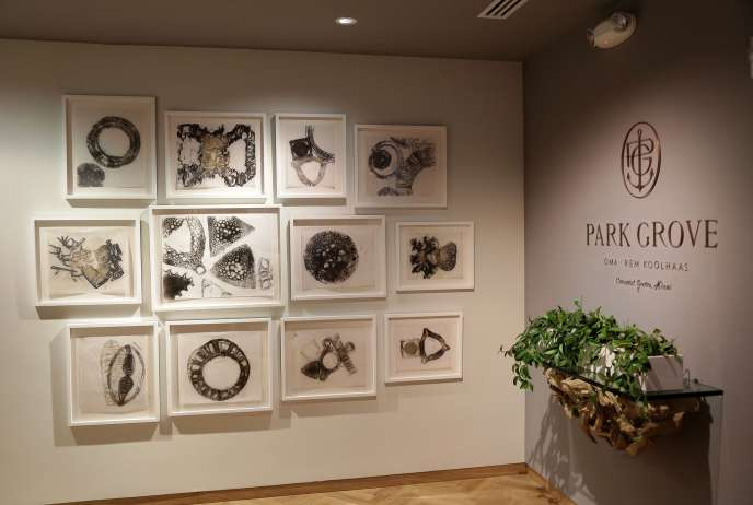 Michele Oka Doner's Exclusive Drawings for Park Grove