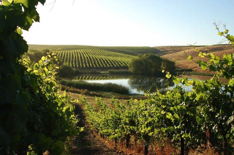 The gorgeous vineyard