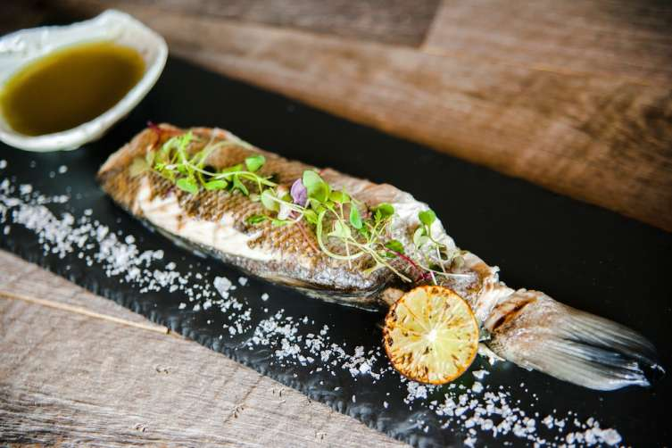 Tanuki fish