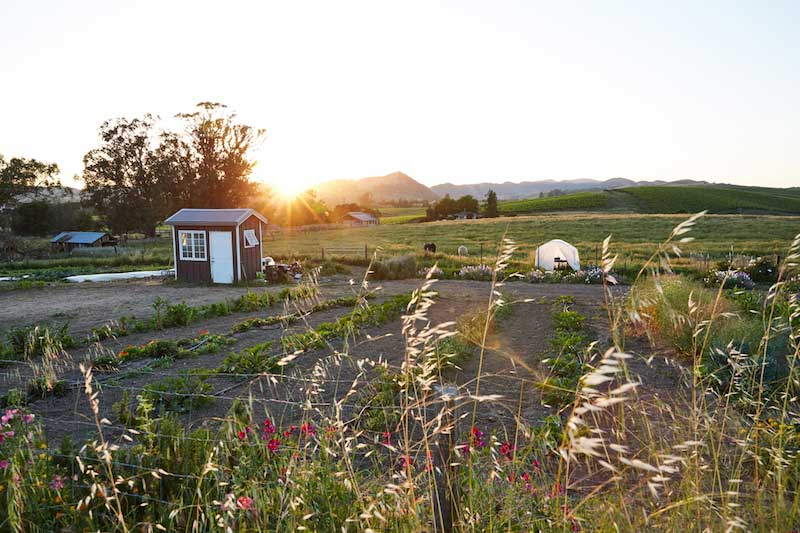 The Carneros Inn's culinary garden