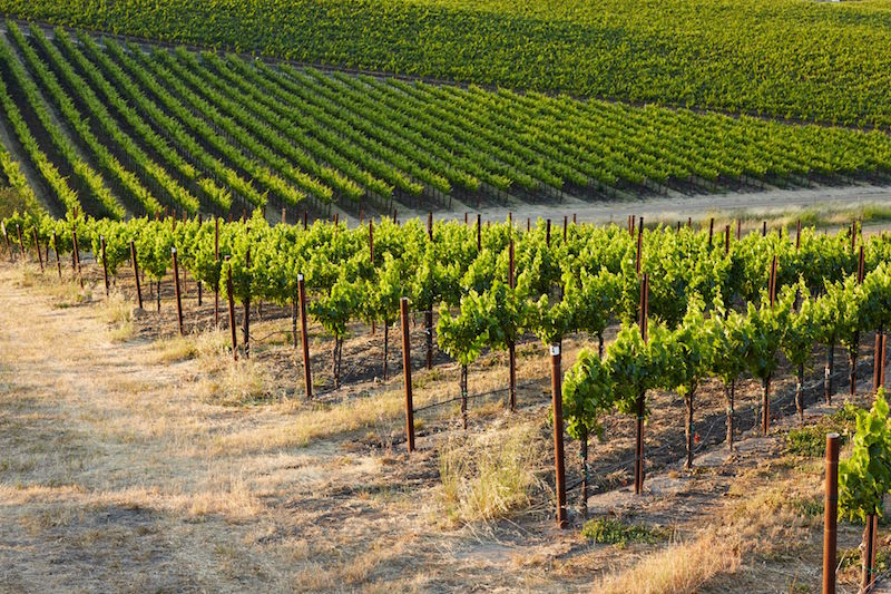 Paragon Vineyards in the Edna Valley