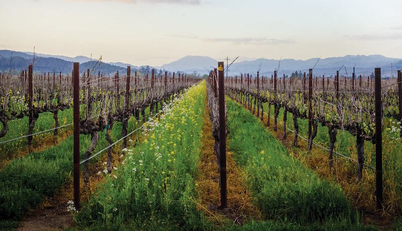 Vineyards at Franciscan Estate