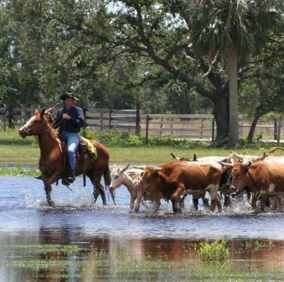 Sidebar Westgate-River-Ranch-Resort-Corporate-Event-Team-Building-Cattle-Drive-near-Lake-Wales-Central-Florida