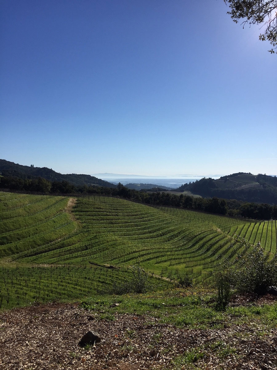 The stunning view from the top of Robert Kamen's Sonoma property
