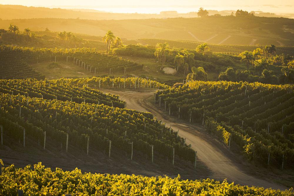 The beautiful vineyards