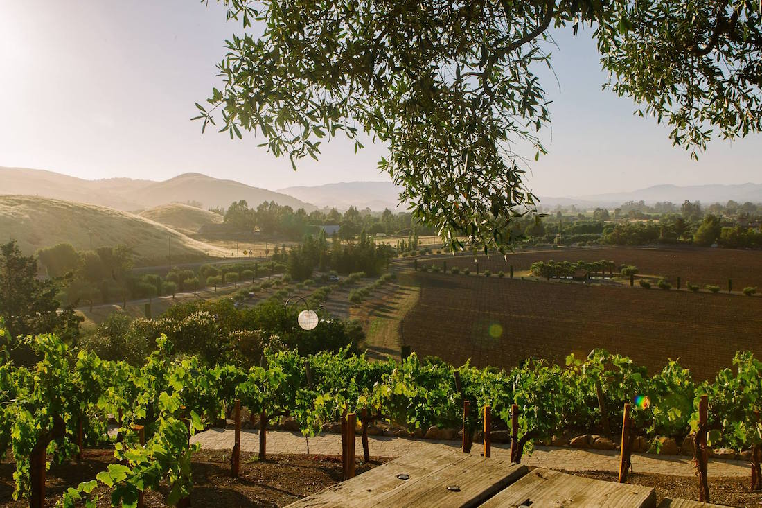 The view from Viansa
