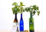 Quick Hits: Millennials Rejoice! New Product Turns Wine Bottle into Herb Garden