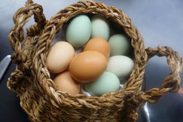 Egg Bow