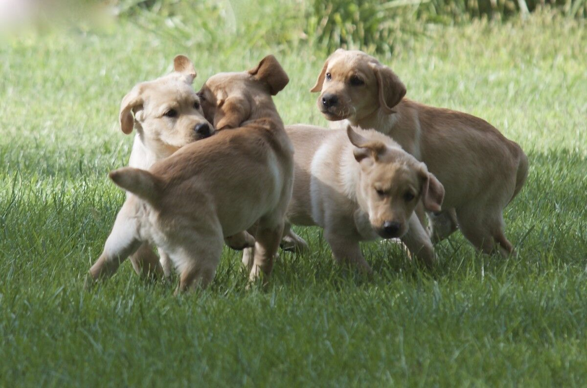 A fleet of adorable puppies