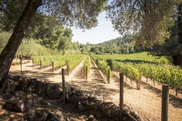 Bulgheroni Esate Vineyard_preview