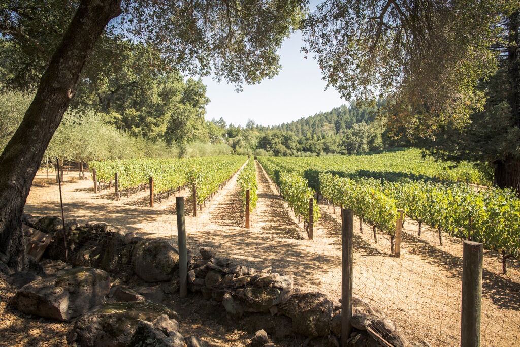 Bulgheroni Esate's vineyard