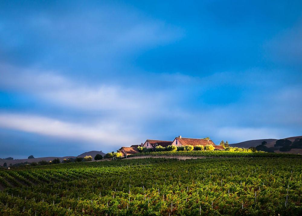 Lush hills surround the vineyard