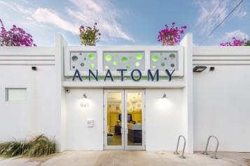 Anatomy revisit-3 (2)