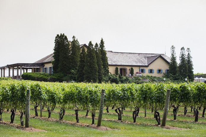 Front of Building from the Vines