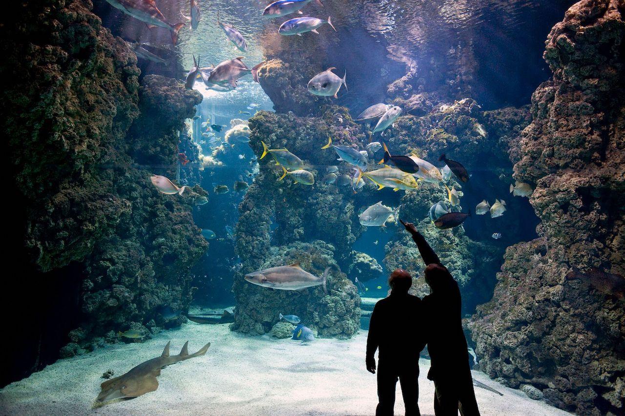 The shark lagoon at the Oceanographic Institute
