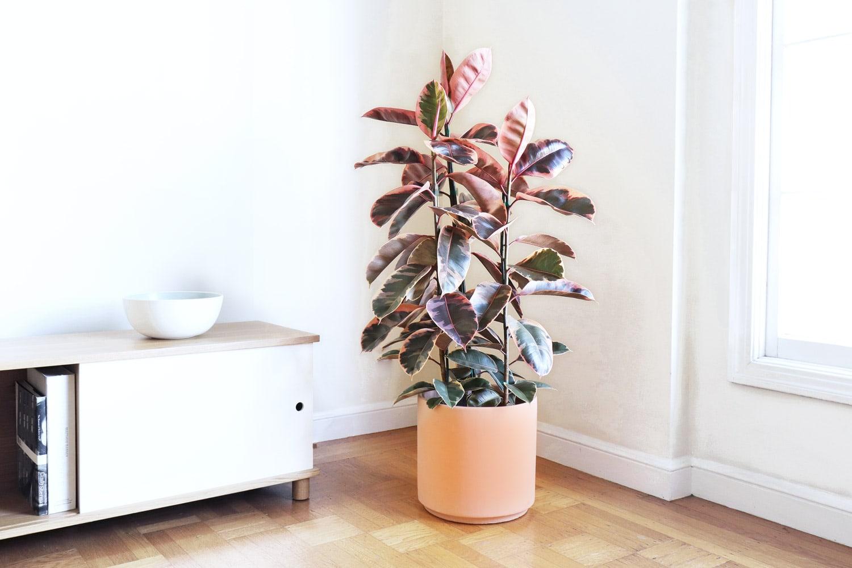 Leon Amp George Makes Premium Plant Shopping Easy