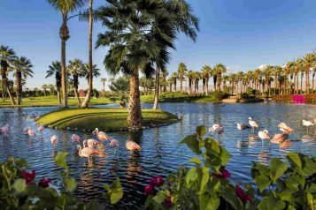 Copy of JW Marriott Desert Springs Resort Spa – Flamingos (2) (1)