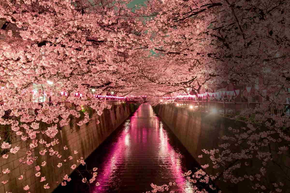 How To Experience Japan S Cherry Blossom Season