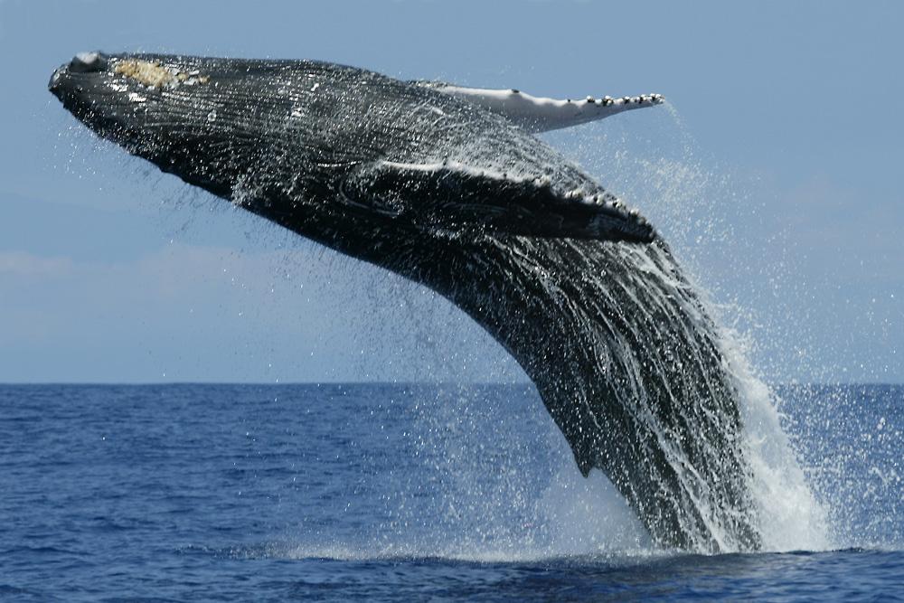 whale_watching_BIG